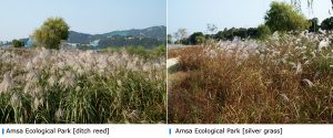 Seoul city recommended three places famous for reed beds