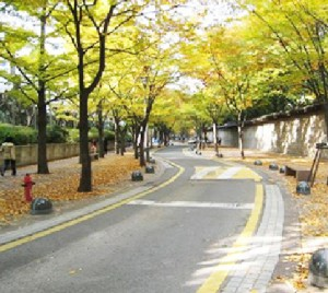 The Pleasure of Strolling along the Tree-Lined Streets of Seoul in Autumn