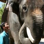 KOSIK THE TALKING ELEPHANT IN SEOUL'S EVERLAND