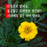 Seoul_Typography_Contest_ds9537@naver.com_2