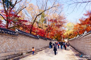 The end of fall : Fall foliage at Changdeokgung Palace