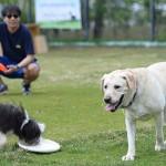 Seoul City to Install Dog Park at Boramae