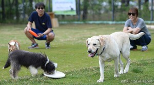 Seoul City to Install Dog Park at Boramae