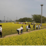 """Seoul's Spring in Bloom"" 《Han River Spring Flower Festival》"