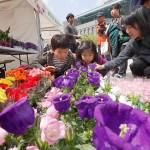 Spring Flower/Tree Market Opened in Seoul Square