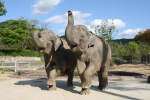 Seoul Grand Park Celebrates Culture Day with Sri Lankan Elephants