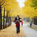 105 Best Fall Foliage Roads in Seoul