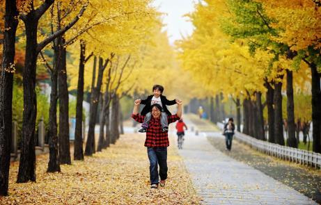 105 Best Fall Foliage Roads in Seoul