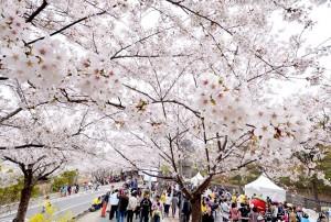 2017 Festivals in Seoul