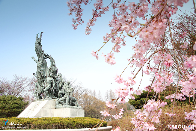 Weeping Cherry Blossoms at Seoul National Cemetery