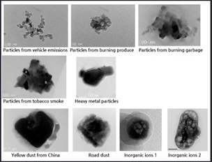 Pictures of various types of fine particles under a microscope(Source: Project team for the reduction of damage caused by fine particles)