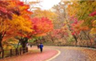 North Walking Path at Namsan Mountain