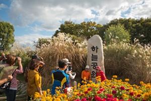 Seoul Silver Grass Festival