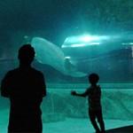 1st Challenge l Lotte Seoul Sky & Aquarium