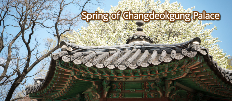 Spring-of-Changdeokgung-Palace