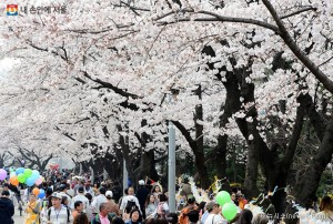 More Pleasant Spring Flowers Festival – Buses Running Extended Hours