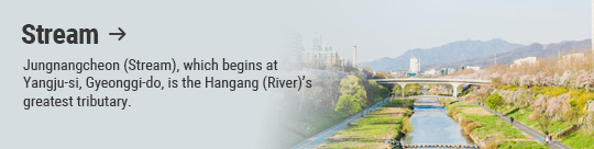 Stream → Jungnangcheon (Stream), which begins at Yangju-si, Gyeonggi-do, is the Hangang (River)'s greatest tributary.
