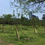 Seoul Constructing Four Different Themed Hangang Forest for Restoration