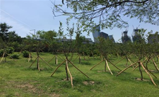 Yeouido Buffer Forest