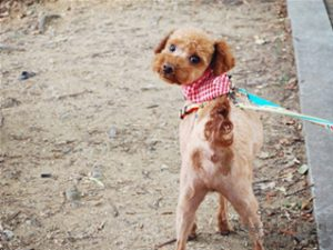 "Seoul hosts ""Fall Picnic with Dogs"""