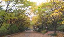 seoul-foliage-trails-12