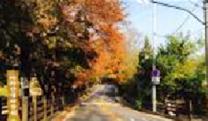 seoul-foliage-trails-14