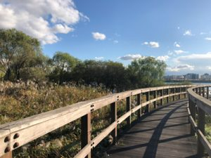 Recommended 4 Best Autumn Trails at Hangang Park