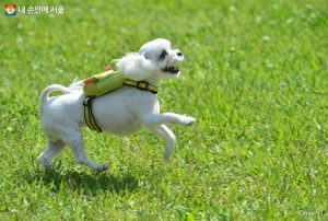 Seoul's Proclamation as Animal-Friendly City with First Embedded Microchip and Adoption Insurance