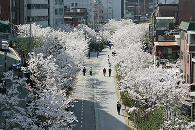 Seoul Introduces 160 Beautiful Spring Flower Paths