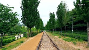 A Seoul's Viewpoint: Gyeongchun Line Forest
