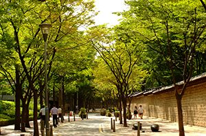220 Well-shaded Streets Selected by Seoul City newsletter