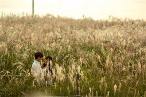 Seoul Silver Grass Festival Begins