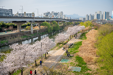 Hadong Plum Street (Cheonggyecheon Stream)