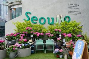 Autumn Stroll on Seoullo 7017 Flower Path