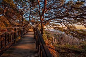 Gangseo Trail (Course 1: Gaehwasan Forest Trail)