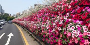 Seoul Cheers Up Citizens Riddled with COVID-19 Anxiety with Spring Flower Streets