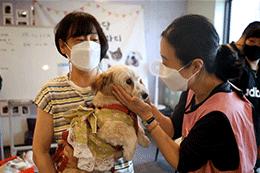 Seoul Encourages Adoption of Abandoned Animals