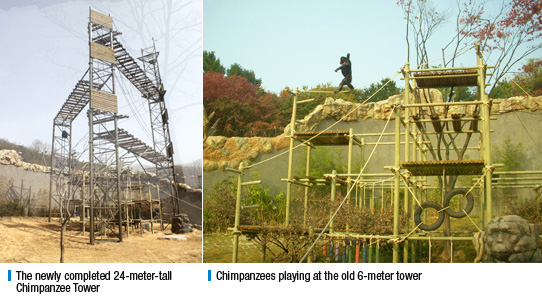 The newly completed 24-meter-tall Chimpanzee Tower , Chimpanzees playing at the old 6-meter tower