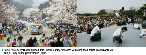 Seoul Zoo Cherry Blossom Road (left), where cherry blossoms will reach their zenith around April 20, and a B-boy dance performance (right).