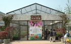 Butterfly Garden Opens at Seoul Forest