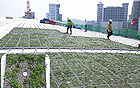 Dongdaemun Design Plaza topped with green roofs