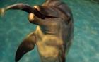[Mayor Park Won Soon's Hope Journal 168] Dolphin Jedori's Return Home