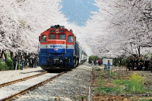 Spring Flowers Train Tours